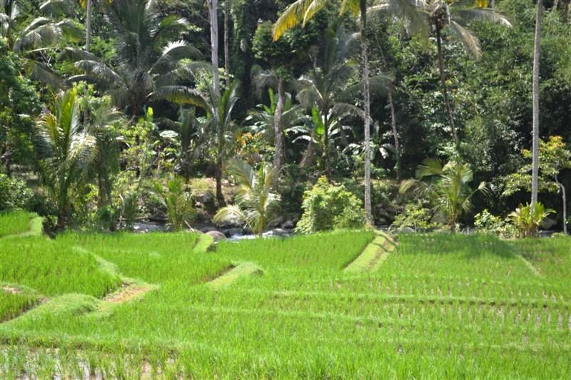 Land for sale in Tabanan land