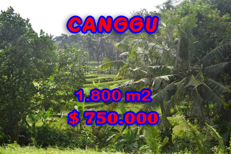 Land-sale-in-Canggu