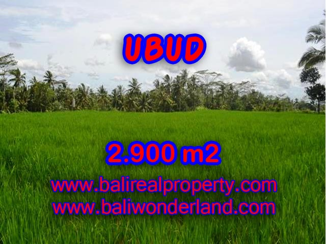 Interesting Land for sale in Ubud Bali, rice field view in Ubud Payangan – TJUB356