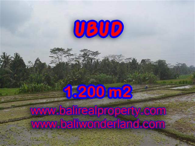 Land in Ubud for sale, Outstanding view in Ubud Payangan Bali – TJUB360