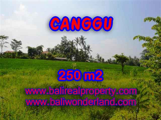 Land for sale in Bali, magnificent view Canggu Bali – TJCG135