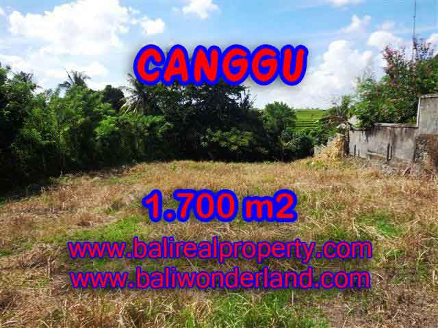 Outstanding Property in Bali for sale, land in Canggu for sale – TJCG143