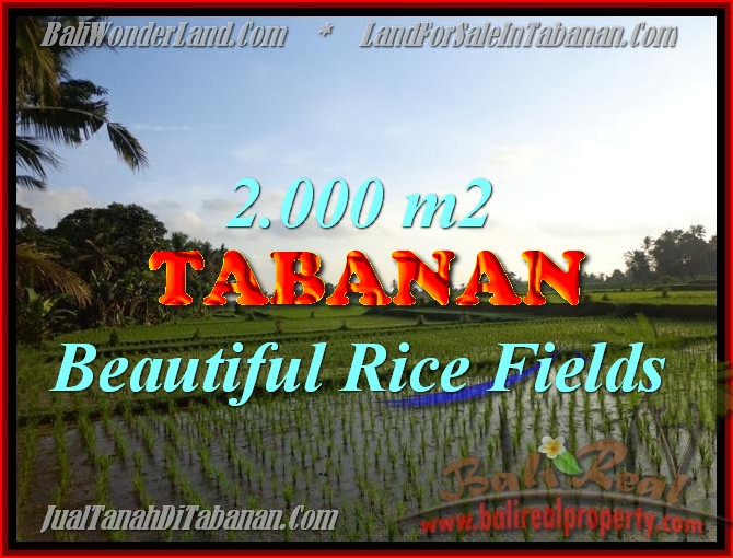 Stunning Land for sale in Bali, Rice fields and Garden View in Tabanan Bali - TJTB151