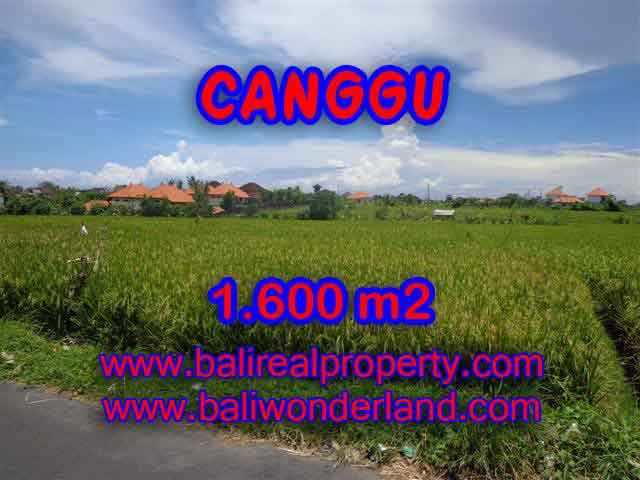 Beautiful Land for sale in Bali, Paddy view closed to the beach in Canggu Bali – TJCG139