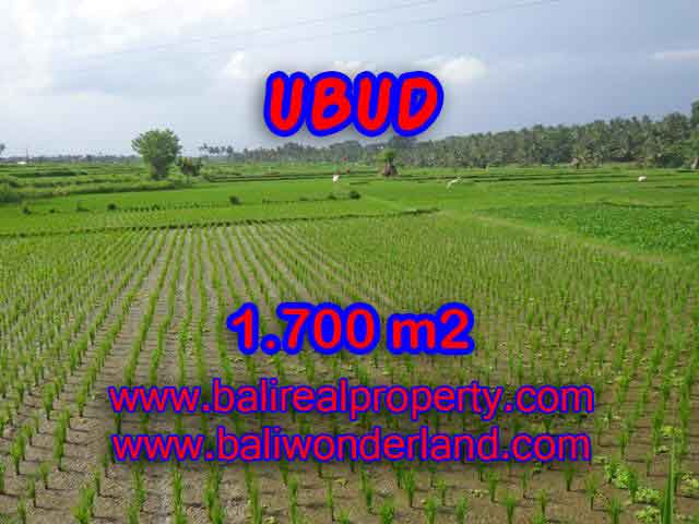 Land for sale in Bali, amazing view in Ubud Center – TJUB398