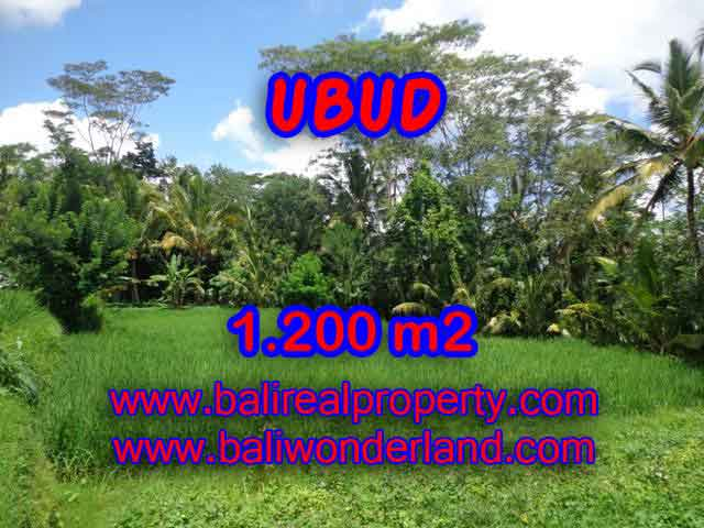 Land for sale in Bali, exotic view in Ubud Payangan Bali – TJUB404