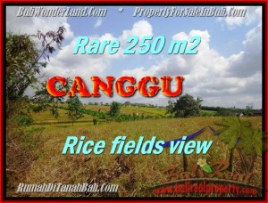 FOR SALE Magnificent PROPERTY 250 m2 LAND IN CANGGU TJCG164