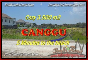 Magnificent 3.500 m2 LAND FOR SALE IN CANGGU TJCG165