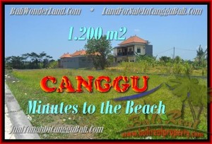 FOR SALE Affordable 1.200 m2 LAND IN Canggu Kayutulang BALI TJCG166