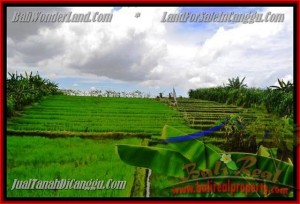 FOR SALE Magnificent PROPERTY 290 m2 LAND IN CANGGU TJCG141