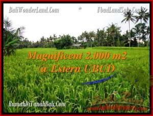 2,000 m2 LAND IN UBUD FOR SALE TJUB485