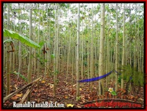 Exotic PROPERTY 3,000 m2 LAND SALE IN TABANAN BALI TJTB159