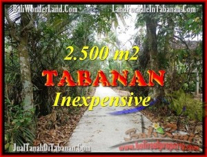 Beautiful PROPERTY 2,500 m2 LAND FOR SALE IN Tabanan Selemadeg TJTB160