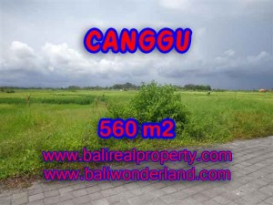 Exotic PROPERTY 560 m2 LAND FOR SALE IN CANGGU BALI TJCG138