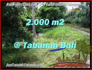 FOR SALE LAND IN Tabanan Selemadeg TJTB206