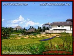 Beautiful LAND IN Canggu Pererenan BALI FOR SALE TJCG146