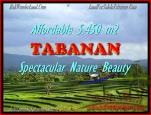 Beautiful PROPERTY LAND IN TABANAN FOR SALE TJTB152
