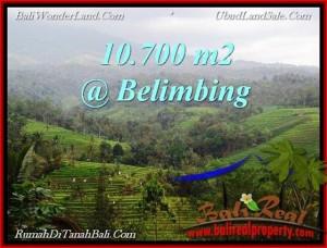 Magnificent LAND SALE IN Tabanan Selemadeg BALI TJTB219