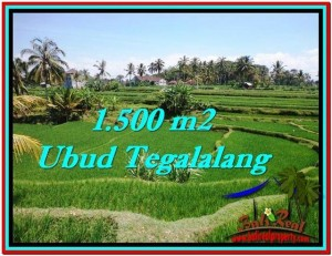 Beautiful PROPERTY 1,500 m2 LAND IN Ubud Tegalalang FOR SALE TJUB528