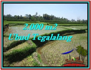 LAND IN Ubud Tegalalang BALI FOR SALE TJUB529