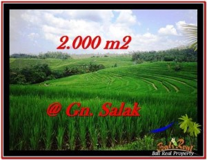 LAND FOR SALE IN Tabanan Selemadeg BALI TJTB227