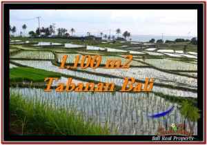 Beautiful PROPERTY 1,100 m2 LAND FOR SALE IN Tabanan Selemadeg TJTB248