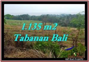 FOR SALE Magnificent LAND IN Tabanan Selemadeg BALI TJTB253