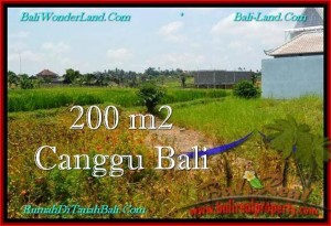 Magnificent 200 m2 LAND SALE IN CANGGU TJCG191