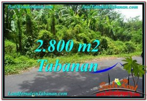 FOR SALE Magnificent PROPERTY 2,800 m2 LAND IN TABANAN BALI TJTB300