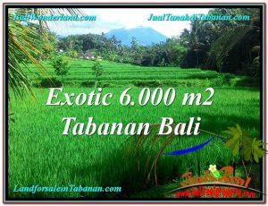 FOR SALE Beautiful LAND IN Tabanan Penebel BALI TJTB306