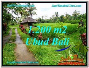 FOR SALE Affordable PROPERTY 1,200 m2 LAND IN UBUD BALI TJUB559