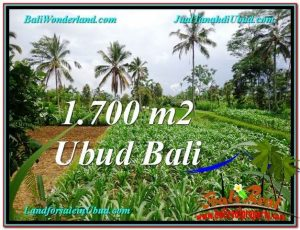 Exotic PROPERTY 1,700 m2 LAND FOR SALE IN Ubud Payangan TJUB560