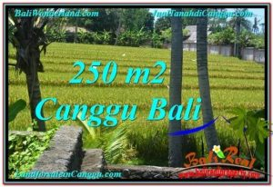 Affordable 250 m2 LAND FOR SALE IN CANGGU TJCG207