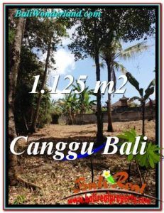 FOR SALE Beautiful PROPERTY LAND IN Canggu Pererenan BALI TJCG208