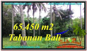 FOR SALE Magnificent PROPERTY 65,450 m2 LAND IN TABANAN BALI TJTB290