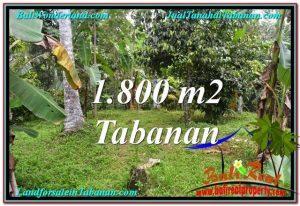 Affordable LAND IN Tabanan Penebel BALI FOR SALE TJTB293