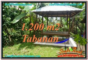 Exotic Tabanan Penebel BALI LAND FOR SALE TJTB294