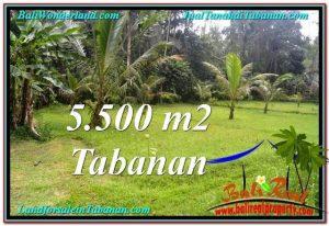 Magnificent LAND SALE IN Tabanan Penebel BALI TJTB295